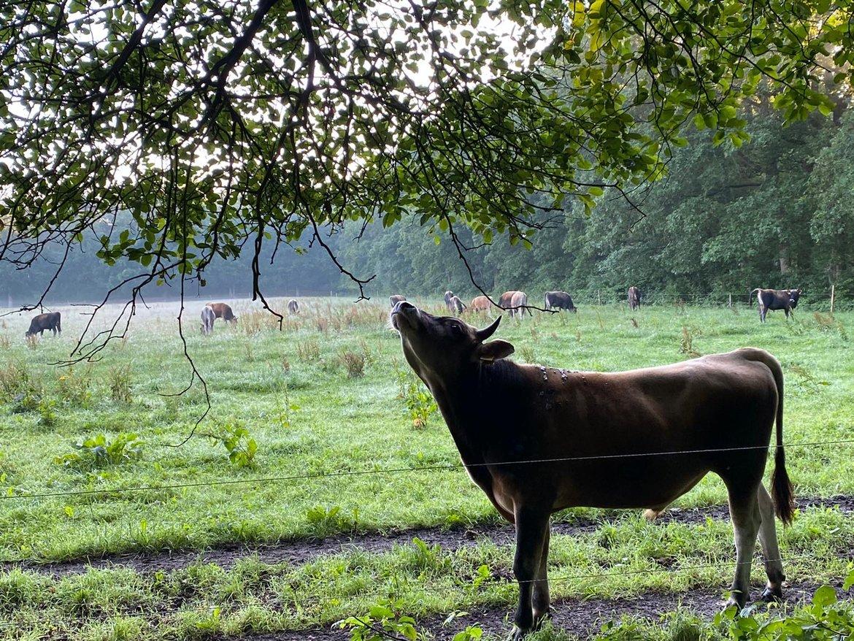 Farmfunding
